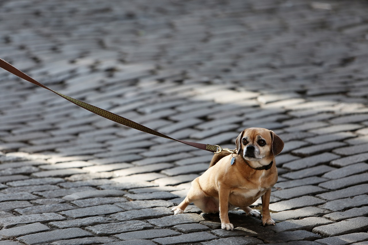 A passeggio con il cane, alcuni consigli