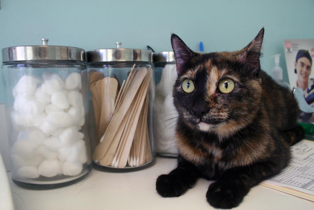 Applicazione gocce gatto, consigili utili