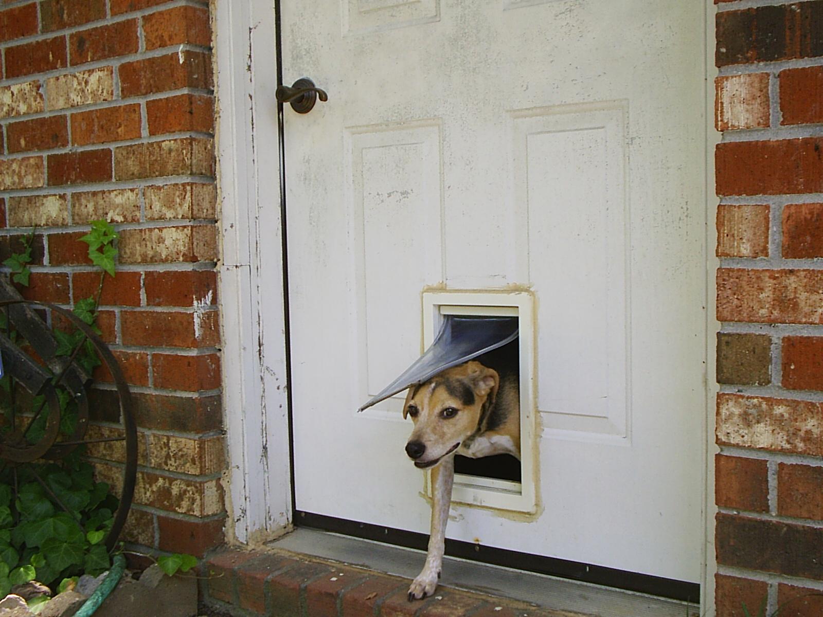 Il cane è scappato, come mai?