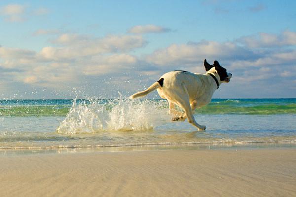 Cane in spiaggia, posso portarlo?