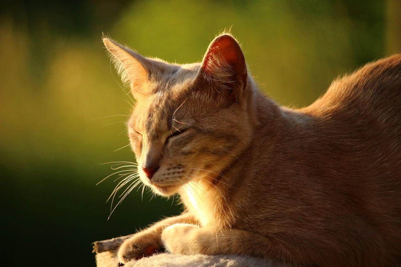 I gatti sognano? Certo che si!