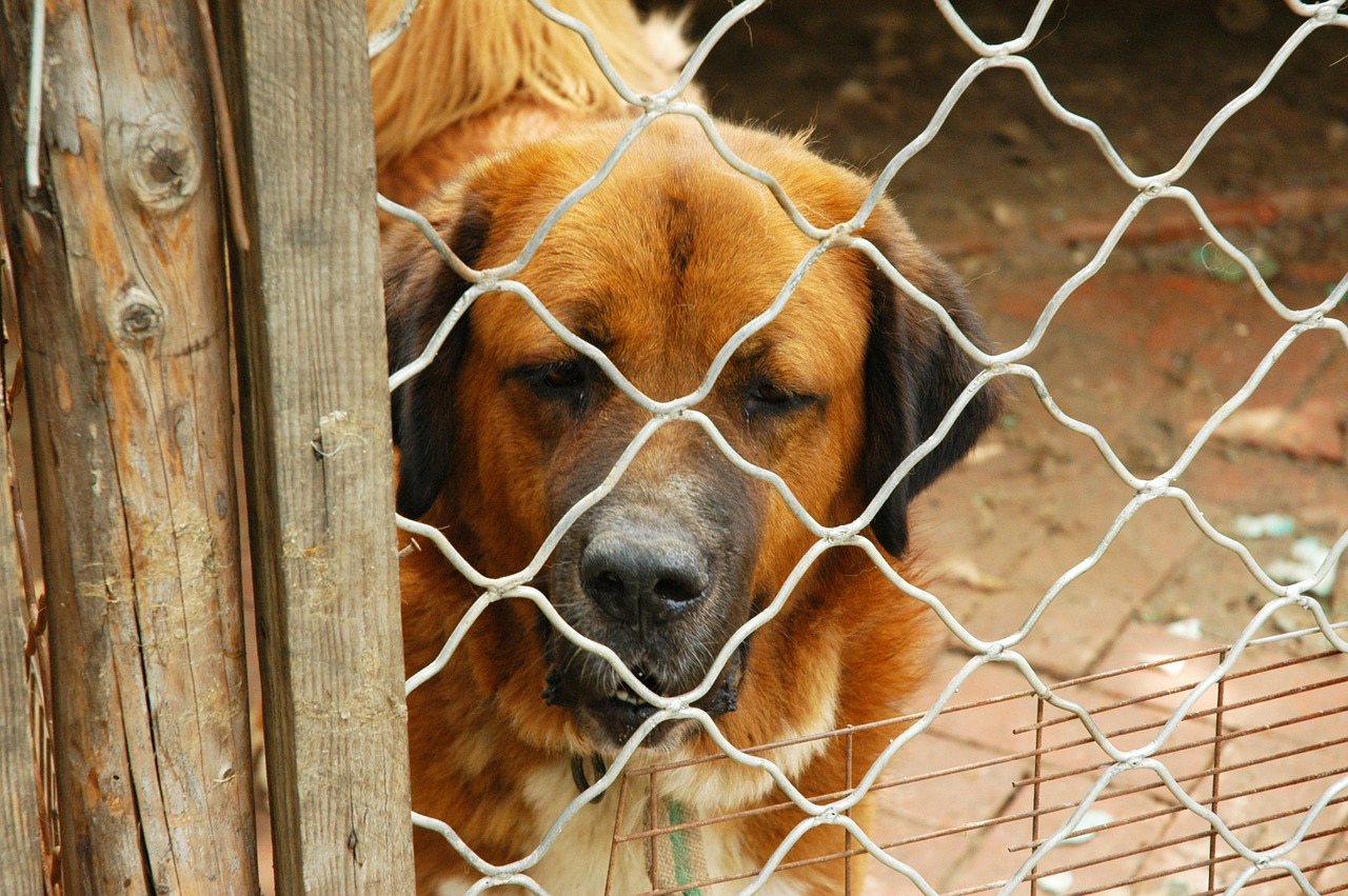Adottare un cane adulto, non solo una scelta di cuore