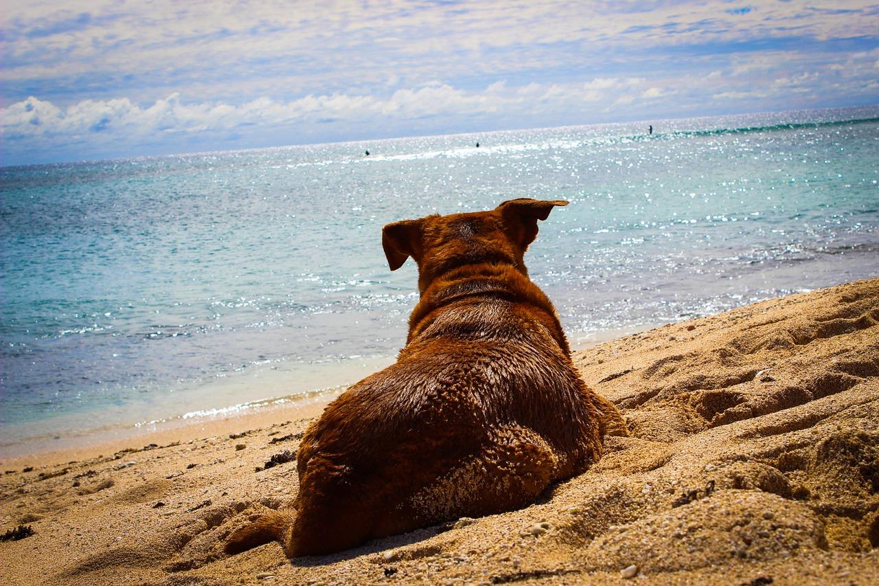 Giocare con il cane in spiaggia