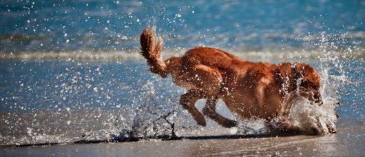 Spiagge dov'è consentito l'accesso ai cani in Italia