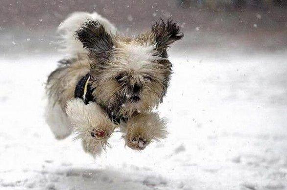 2 Aiuti per il Benessere di Articolazioni e Cartilagini dei Cani
