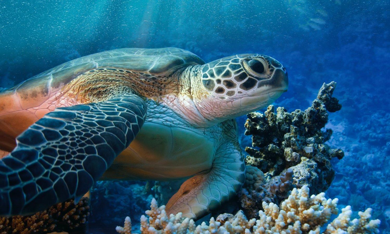 Tartarughe sensibili al mondo ulisse quality shop for Acquario tartarughe vendita online