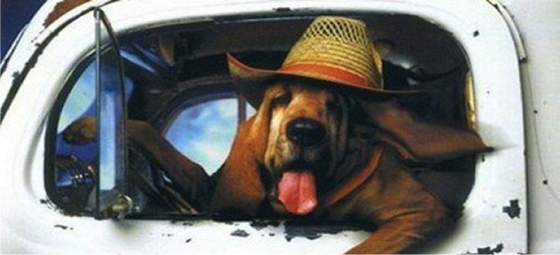 5 modi per trasportare in auto cani e gatti