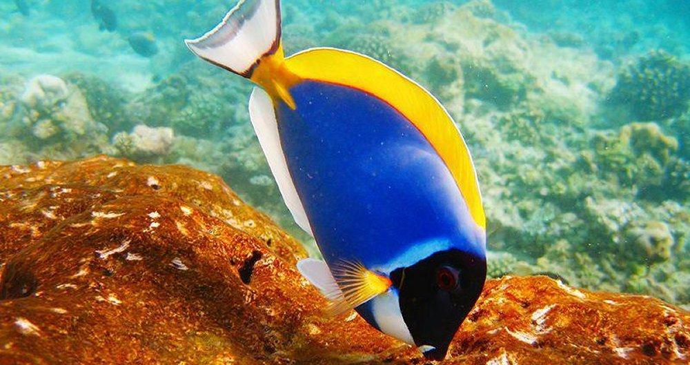 Nutrizione dei Pesci Ornamentali da Acquario